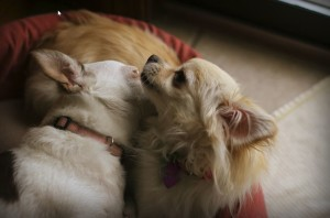 Marriage Awakening - Dog Fight