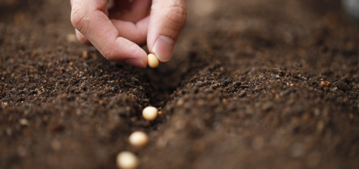 Marriage Awakening - Sowing Seeds